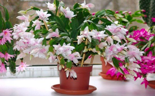 4 комнатных растения, которые сохранят в доме счастье
